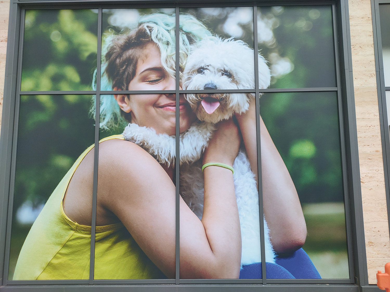 Retail shop window graphics – Dog cuddles Pets At Home window