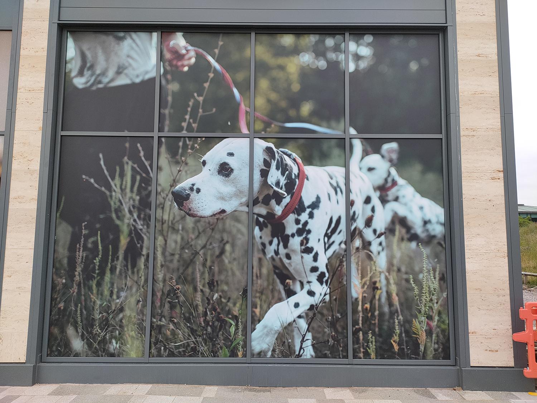 Custom window graphics – Dalmatian running Pets At Home